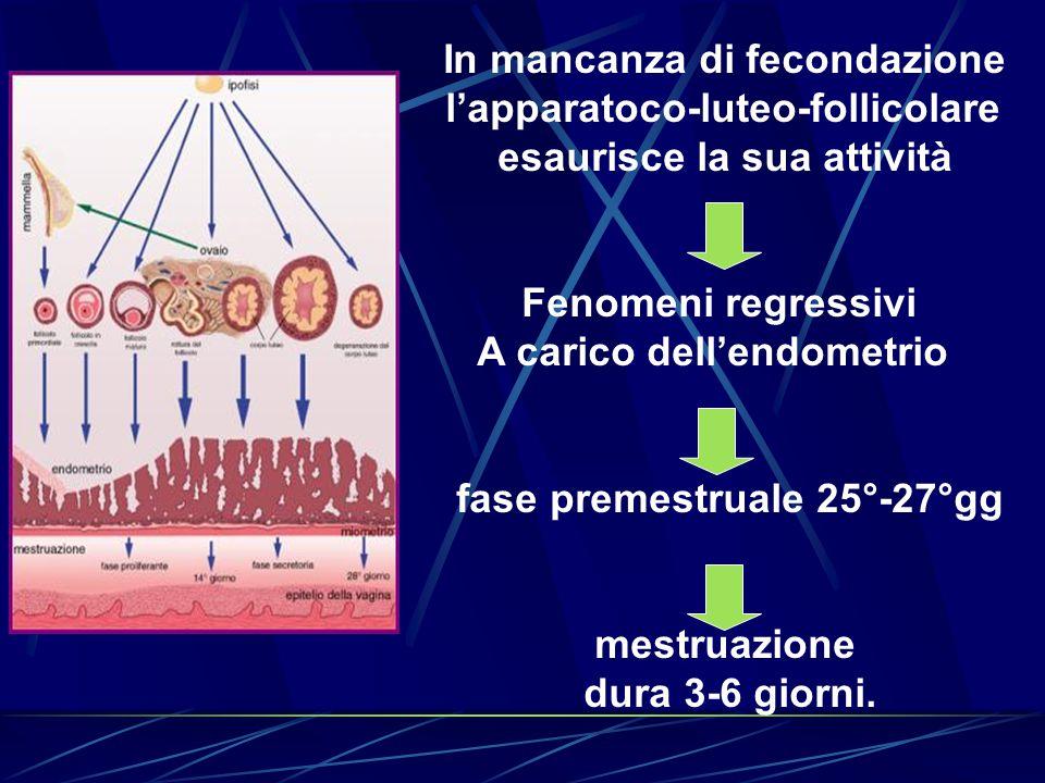 In mancanza di fecondazione l'apparatoco-luteo-follicolare esaurisce la sua attività Fenomeni regressivi A carico dell'endometrio fase premestruale 25