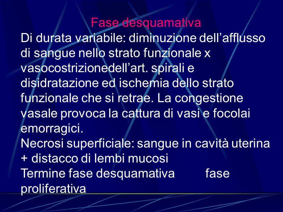 Fase desquamativa Di durata variabile: diminuzione dell'afflusso di sangue nello strato funzionale x vasocostrizionedell'art. spirali e disidratazione