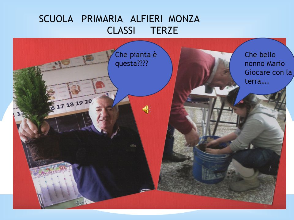 SCUOLA PRIMARIA ALFIERI MONZA CLASSI TERZE Che pianta è questa???.