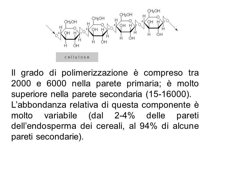 Il grado di polimerizzazione è compreso tra 2000 e 6000 nella parete primaria; è molto superiore nella parete secondaria (15-16000). L'abbondanza rela