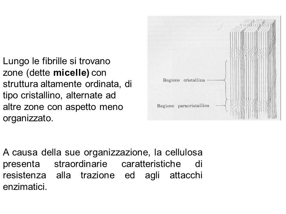 Lungo le fibrille si trovano zone (dette micelle) con struttura altamente ordinata, di tipo cristallino, alternate ad altre zone con aspetto meno orga