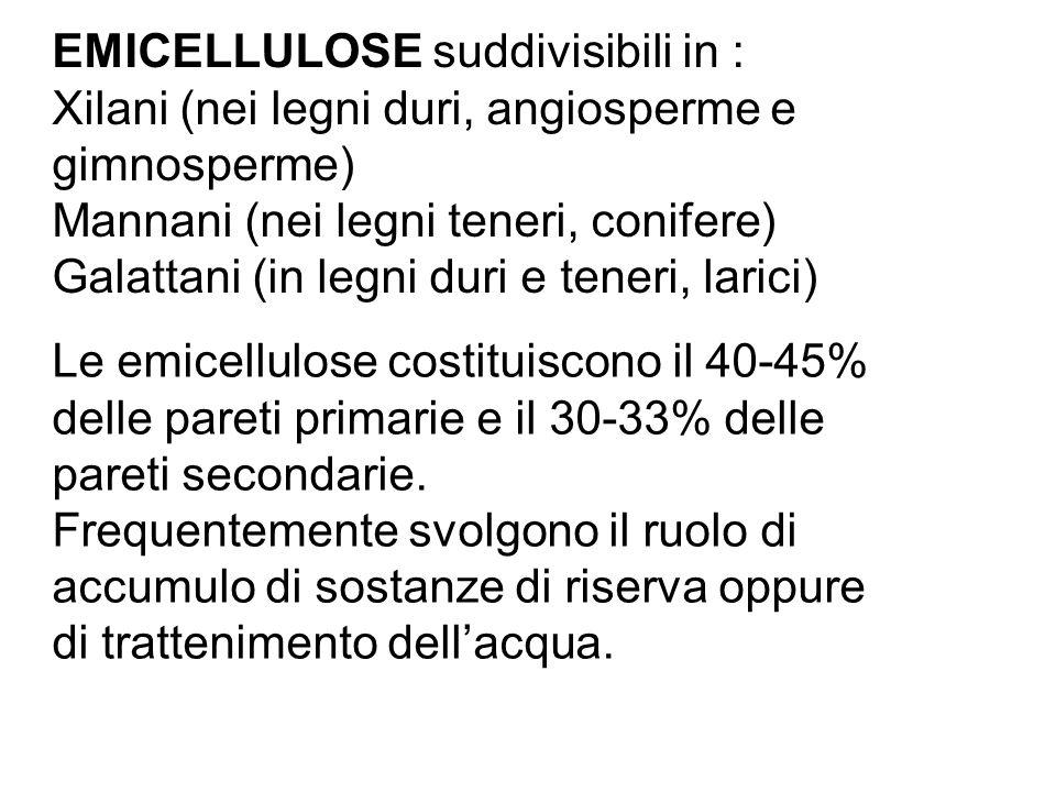 EMICELLULOSE suddivisibili in : Xilani (nei legni duri, angiosperme e gimnosperme) Mannani (nei legni teneri, conifere) Galattani (in legni duri e ten