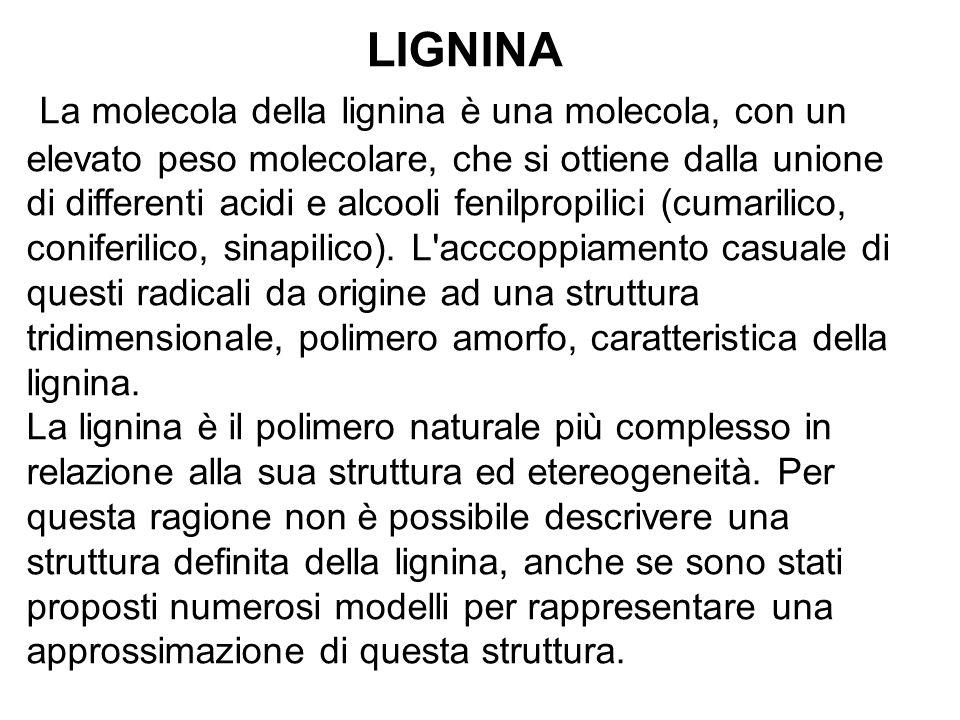 LIGNINA La molecola della lignina è una molecola, con un elevato peso molecolare, che si ottiene dalla unione di differenti acidi e alcooli fenilpropi