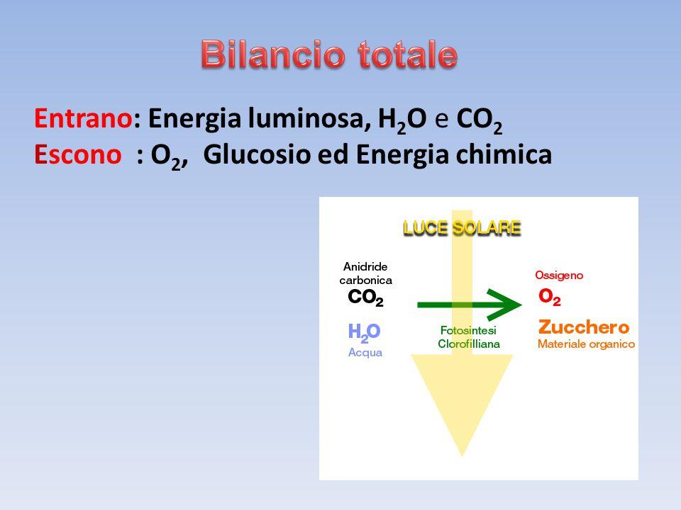 Entrano: Energia luminosa, H 2 O e CO 2 Escono : O 2, Glucosio ed Energia chimica