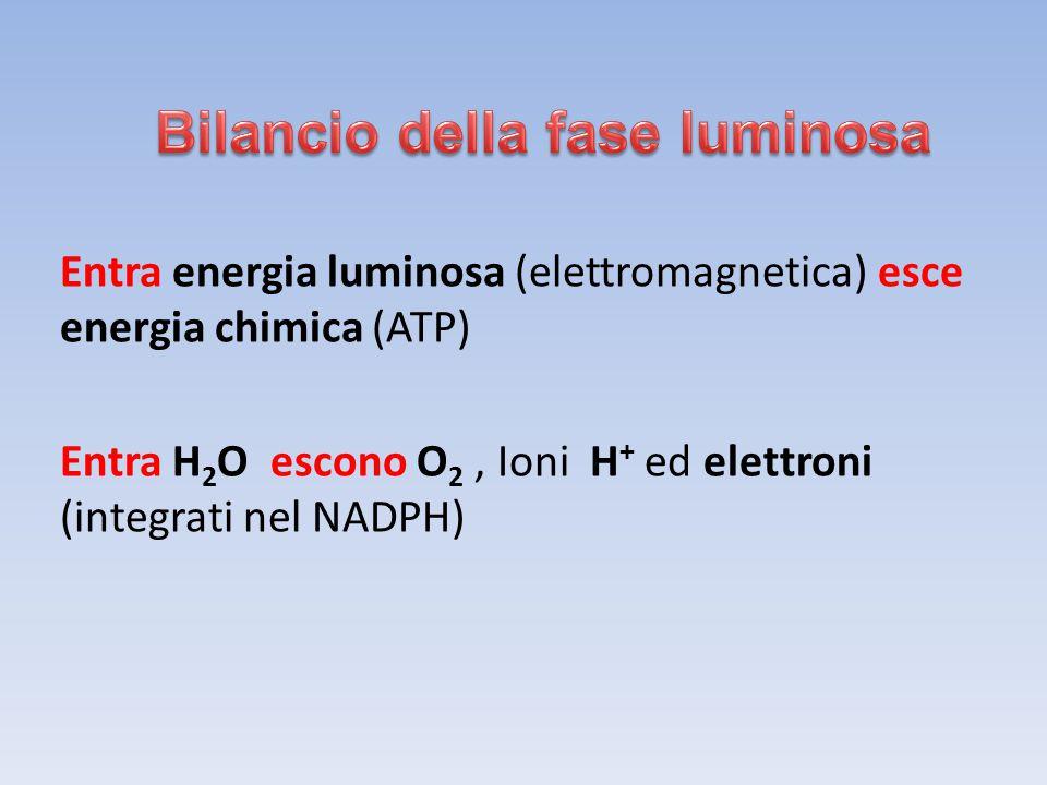Entra energia luminosa (elettromagnetica) esce energia chimica (ATP) Entra H 2 O escono O 2, Ioni H + ed elettroni (integrati nel NADPH)