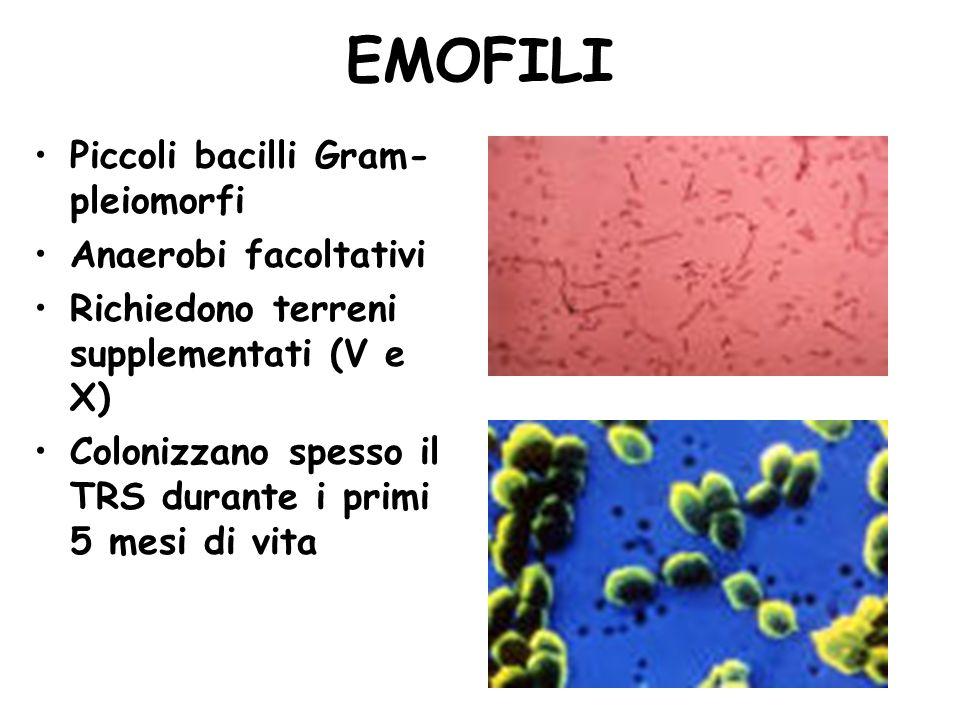 EMOFILI Piccoli bacilli Gram- pleiomorfi Anaerobi facoltativi Richiedono terreni supplementati (V e X) Colonizzano spesso il TRS durante i primi 5 mes