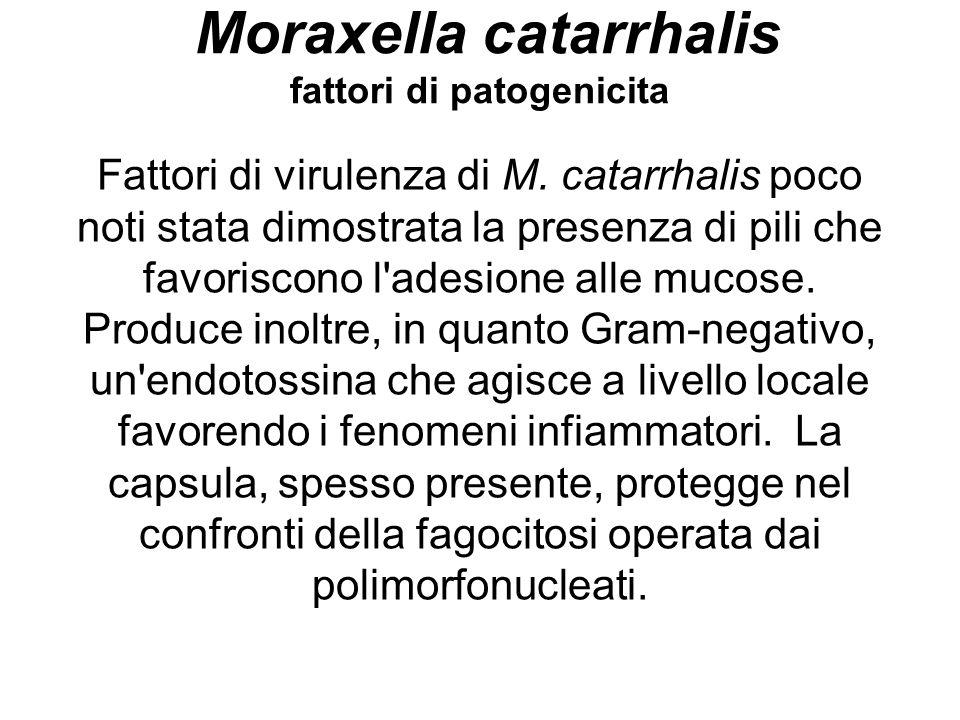 Moraxella catarrhalis fattori di patogenicita Fattori di virulenza di M. catarrhalis poco noti stata dimostrata la presenza di pili che favoriscono l'