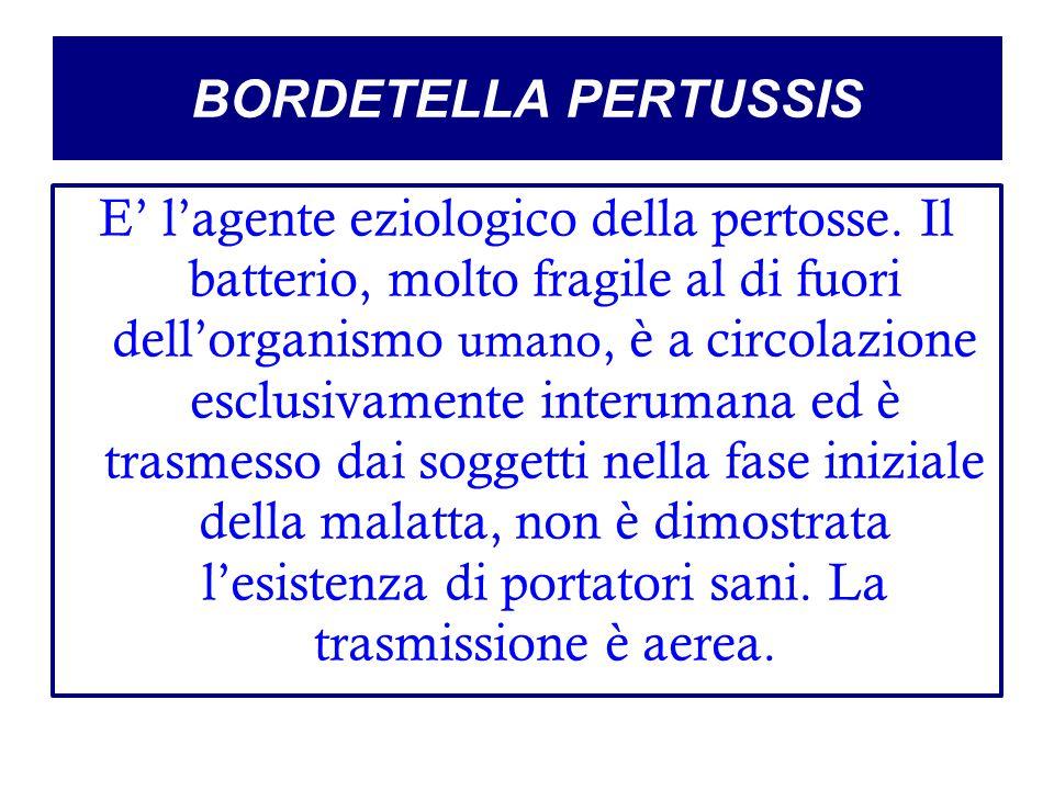 BORDETELLA PERTUSSIS E' l'agente eziologico della pertosse. Il batterio, molto fragile al di fuori dell'organismo umano, è a circolazione esclusivamen