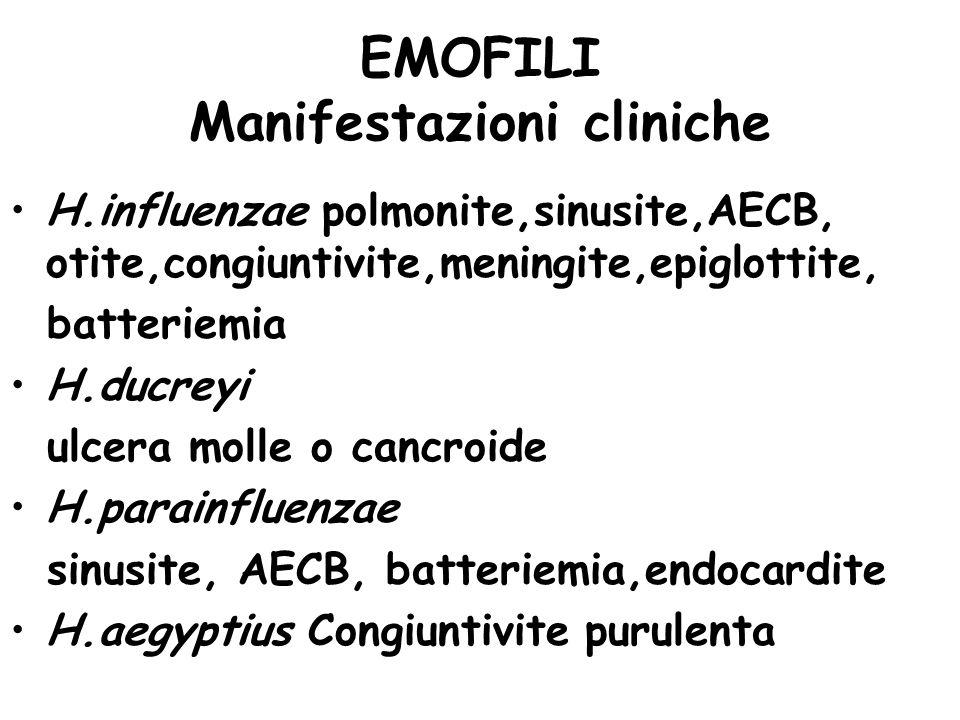 EMOFILI Manifestazioni cliniche H.influenzae polmonite,sinusite,AECB, otite,congiuntivite,meningite,epiglottite, batteriemia H.ducreyi ulcera molle o