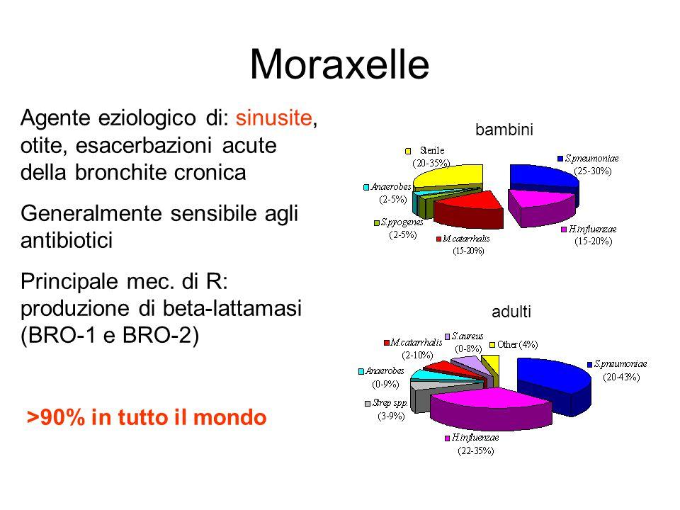 Moraxelle Agente eziologico di: sinusite, otite, esacerbazioni acute della bronchite cronica Generalmente sensibile agli antibiotici Principale mec. d