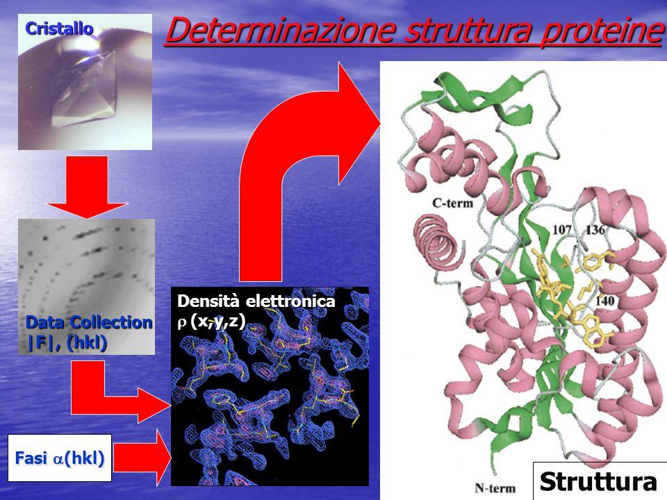 Cristallo Data Collection |F|, (hkl) Fasi  (hkl) Densità elettronica  (x,y,z) Struttura Determinazione struttura proteine