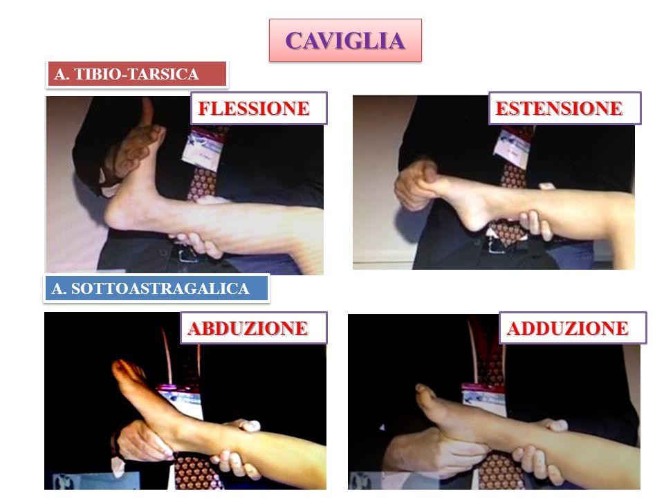 CAVIGLIACAVIGLIA A. TIBIO-TARSICA A. SOTTOASTRAGALICA FLESSIONEESTENSIONE ABDUZIONEADDUZIONE