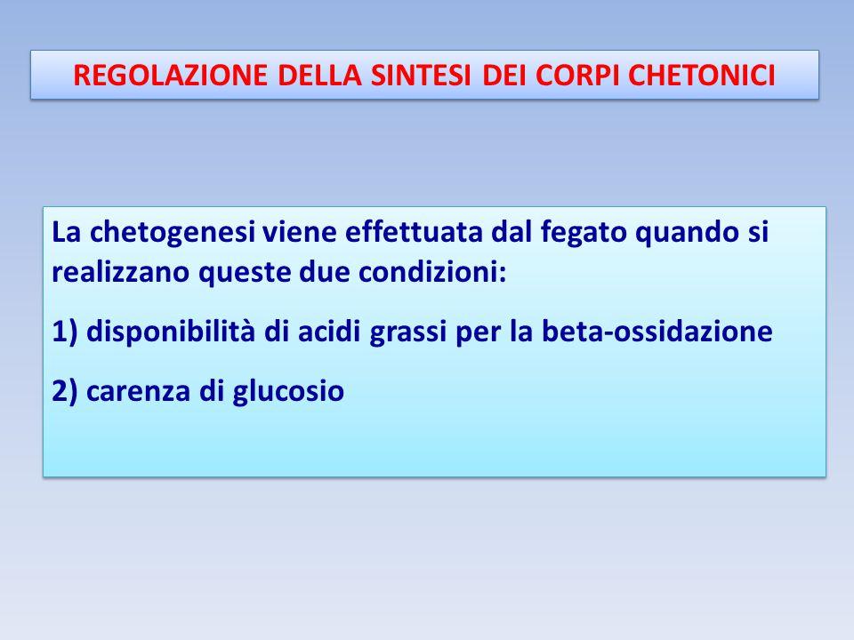 REGOLAZIONE DELLA SINTESI DEI CORPI CHETONICI La chetogenesi viene effettuata dal fegato quando si realizzano queste due condizioni: 1) disponibilità di acidi grassi per la beta-ossidazione 2) carenza di glucosio La chetogenesi viene effettuata dal fegato quando si realizzano queste due condizioni: 1) disponibilità di acidi grassi per la beta-ossidazione 2) carenza di glucosio