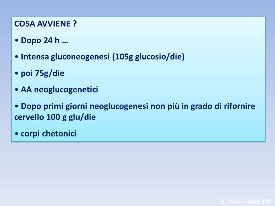 A. Paoli – Univ. PD COSA AVVIENE ? Dopo 24 h … Intensa gluconeogenesi (105g glucosio/die) poi 75g/die AA neoglucogenetici Dopo primi giorni neoglucoge
