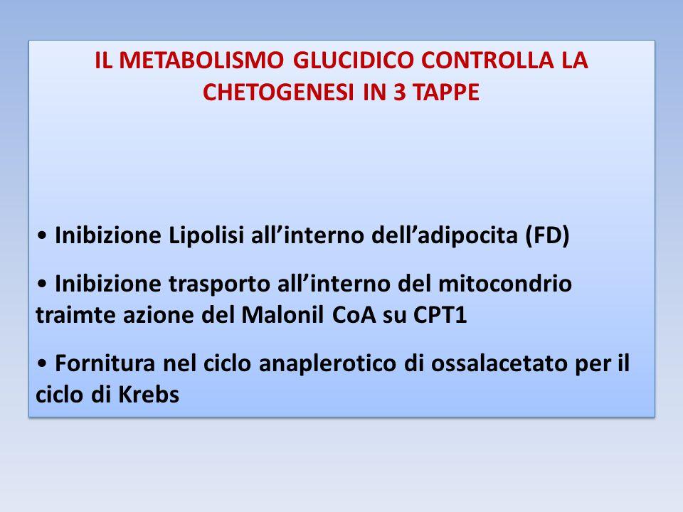 IL METABOLISMO GLUCIDICO CONTROLLA LA CHETOGENESI IN 3 TAPPE Inibizione Lipolisi all'interno dell'adipocita (FD) Inibizione trasporto all'interno del mitocondrio traimte azione del Malonil CoA su CPT1 Fornitura nel ciclo anaplerotico di ossalacetato per il ciclo di Krebs IL METABOLISMO GLUCIDICO CONTROLLA LA CHETOGENESI IN 3 TAPPE Inibizione Lipolisi all'interno dell'adipocita (FD) Inibizione trasporto all'interno del mitocondrio traimte azione del Malonil CoA su CPT1 Fornitura nel ciclo anaplerotico di ossalacetato per il ciclo di Krebs
