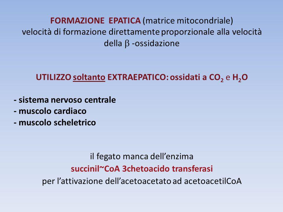 FORMAZIONE EPATICA (matrice mitocondriale) velocità di formazione direttamente proporzionale alla velocità della  -ossidazione UTILIZZO soltanto EXTR