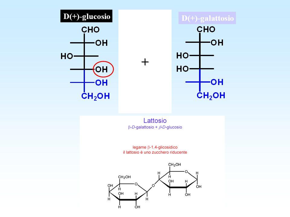 D(+)-glucosio D(+)-galattosio+