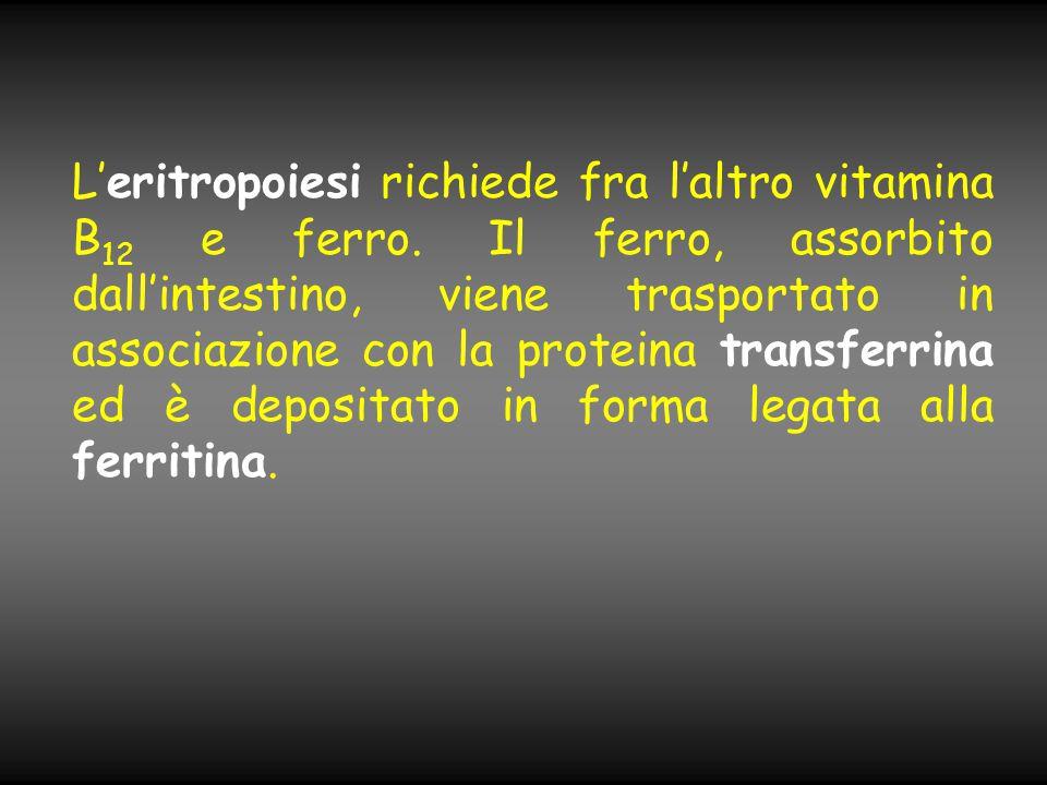 L'eritropoiesi richiede fra l'altro vitamina B 12 e ferro. Il ferro, assorbito dall'intestino, viene trasportato in associazione con la proteina trans