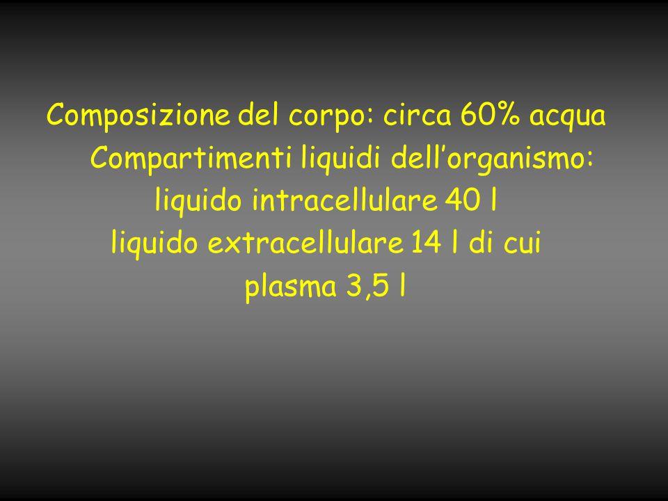 Composizione del corpo: circa 60% acqua Compartimenti liquidi dell'organismo: liquido intracellulare 40 l liquido extracellulare 14 l di cui plasma 3,