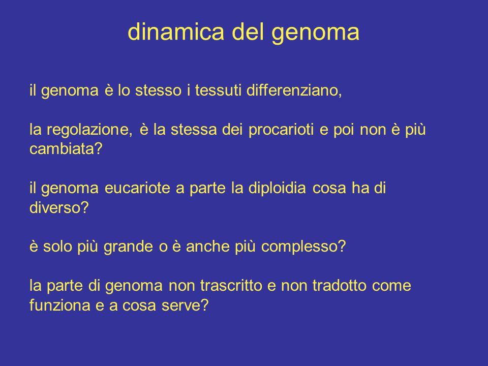 dinamica del genoma il genoma è lo stesso i tessuti differenziano, la regolazione, è la stessa dei procarioti e poi non è più cambiata.