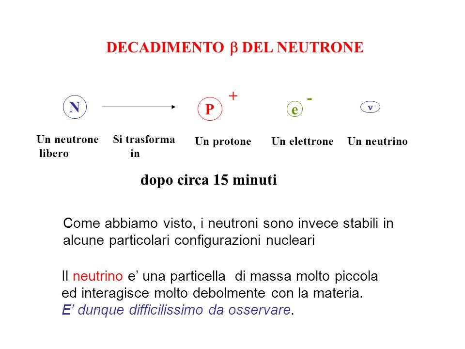 DECADIMENTO  DEL NEUTRONE N P + e - Un neutrone libero Si trasforma in Un protone Un elettrone Un neutrino dopo circa 15 minuti Il neutrino e' una particella di massa molto piccola ed interagisce molto debolmente con la materia.