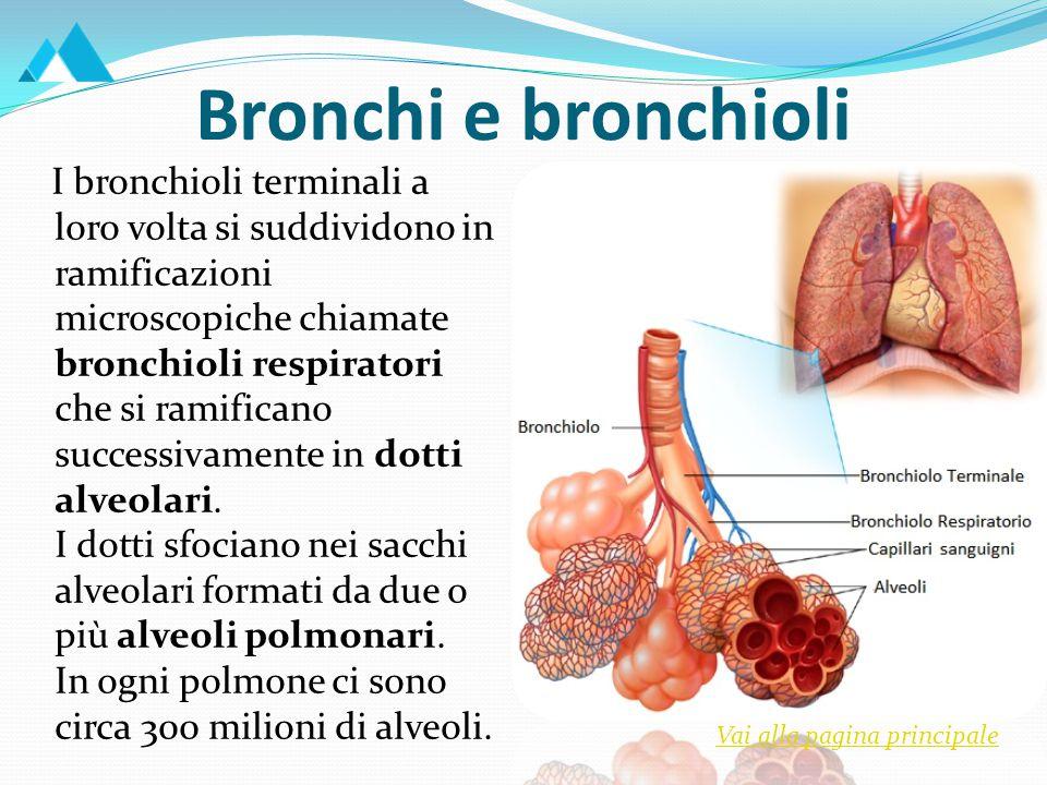 I Polmoni I polmoni si trovano nella cavità toracica e poggiano sul diaframma.