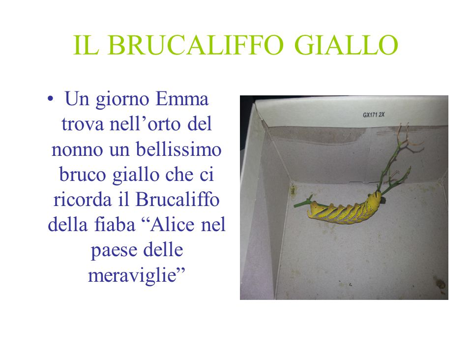 IL BRUCALIFFO GIALLO Un giorno Emma trova nell'orto del nonno un bellissimo bruco giallo che ci ricorda il Brucaliffo della fiaba Alice nel paese delle meraviglie