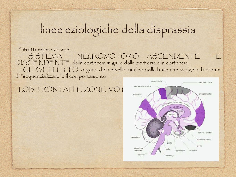 linee eziologiche della disprassia Strutture interessate: - SISTEMA NEUROMOTORIO ASCENDENTE E DISCENDENTE dalla corteccia in giù e dalla periferia all