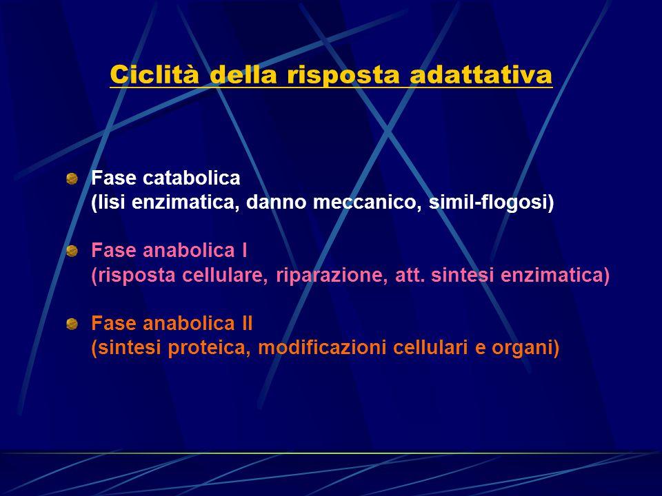 Ciclità della risposta adattativa Fase catabolica (lisi enzimatica, danno meccanico, simil-flogosi) Fase anabolica I (risposta cellulare, riparazione,