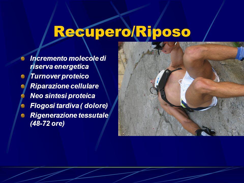 Recupero/Riposo Incremento molecole di riserva energetica Turnover proteico Riparazione cellulare Neo sintesi proteica Flogosi tardiva ( dolore) Rigenerazione tessutale (48-72 ore)