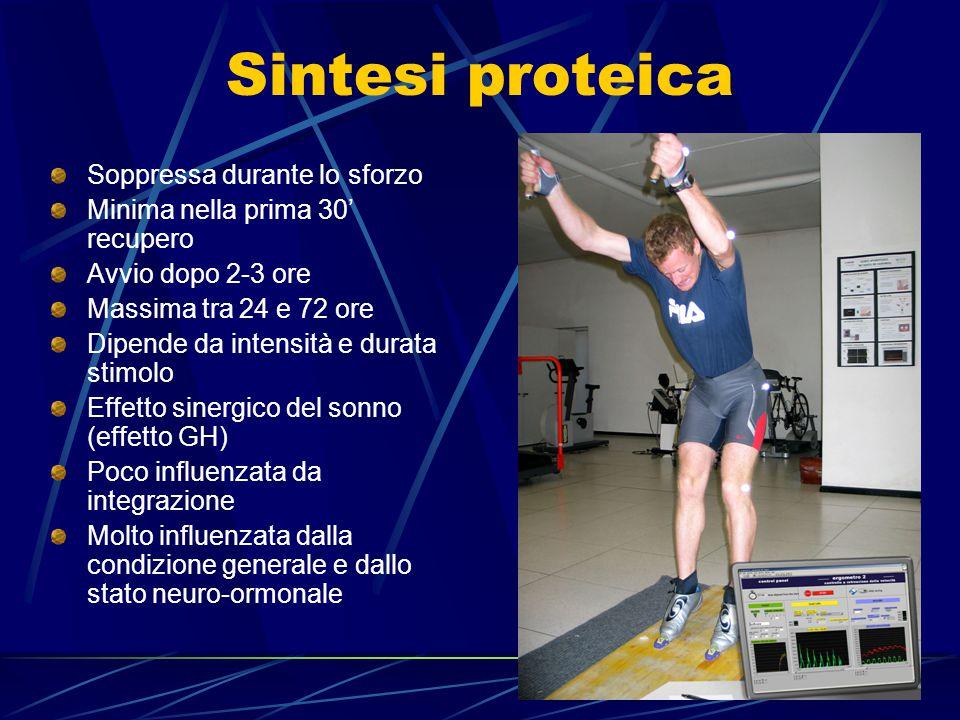 Sintesi proteica Soppressa durante lo sforzo Minima nella prima 30' recupero Avvio dopo 2-3 ore Massima tra 24 e 72 ore Dipende da intensità e durata