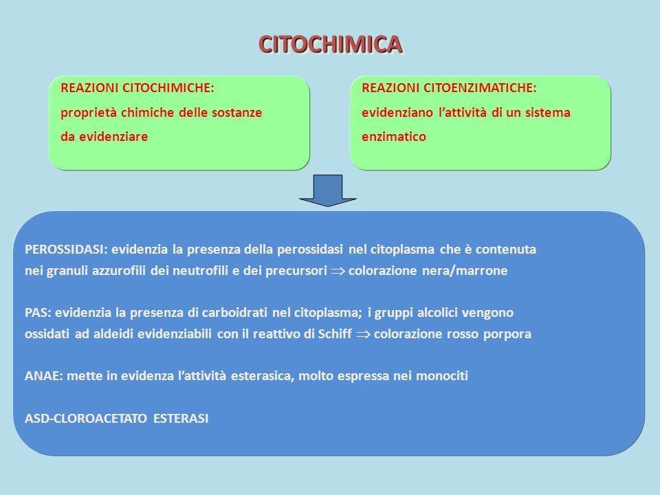 CITOCHIMICACITOCHIMICA REAZIONI CITOCHIMICHE: proprietà chimiche delle sostanze da evidenziare PEROSSIDASI: evidenzia la presenza della perossidasi ne
