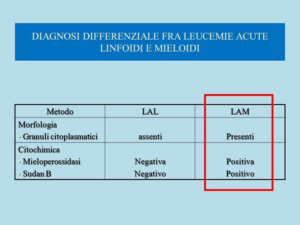 DIAGNOSI DIFFERENZIALE FRA LEUCEMIE ACUTE LINFOIDI E MIELOIDI MetodoLALLAM Morfologia Granuli citoplasmatici Granuli citoplasmaticiassentiPresenti Cit