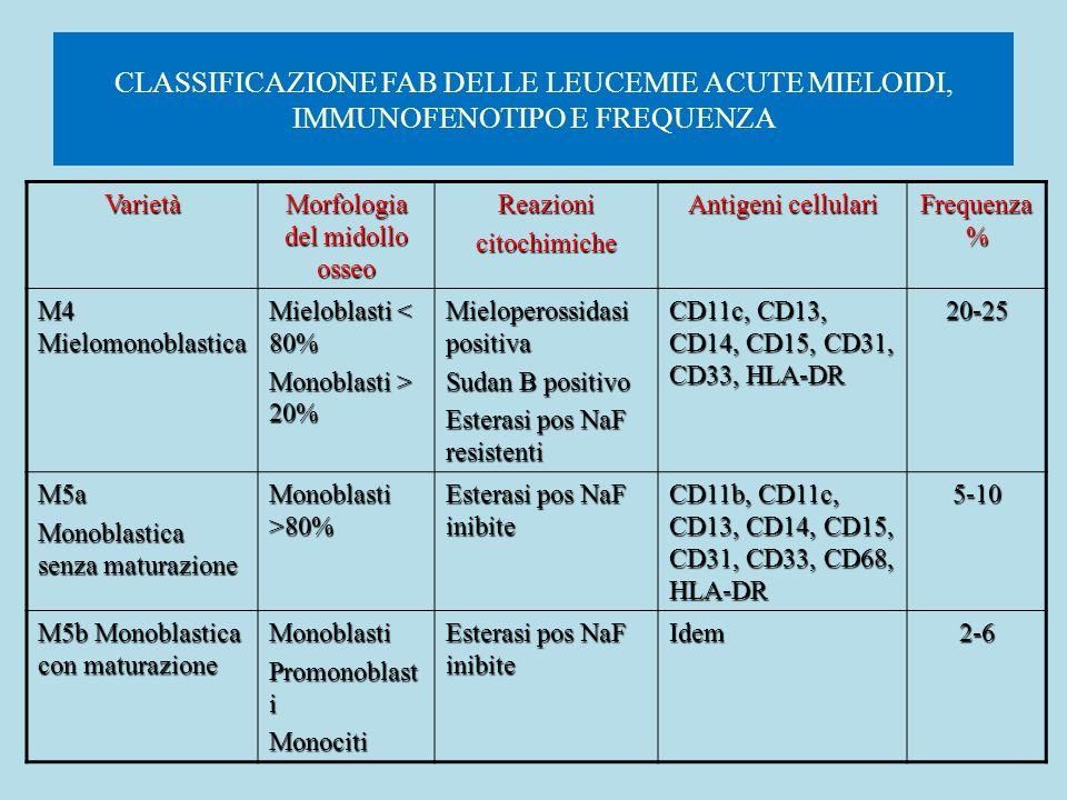 CLASSIFICAZIONE FAB DELLE LEUCEMIE ACUTE MIELOIDI, IMMUNOFENOTIPO E FREQUENZA Varietà Morfologia del midollo osseo Reazionicitochimiche Antigeni cellu