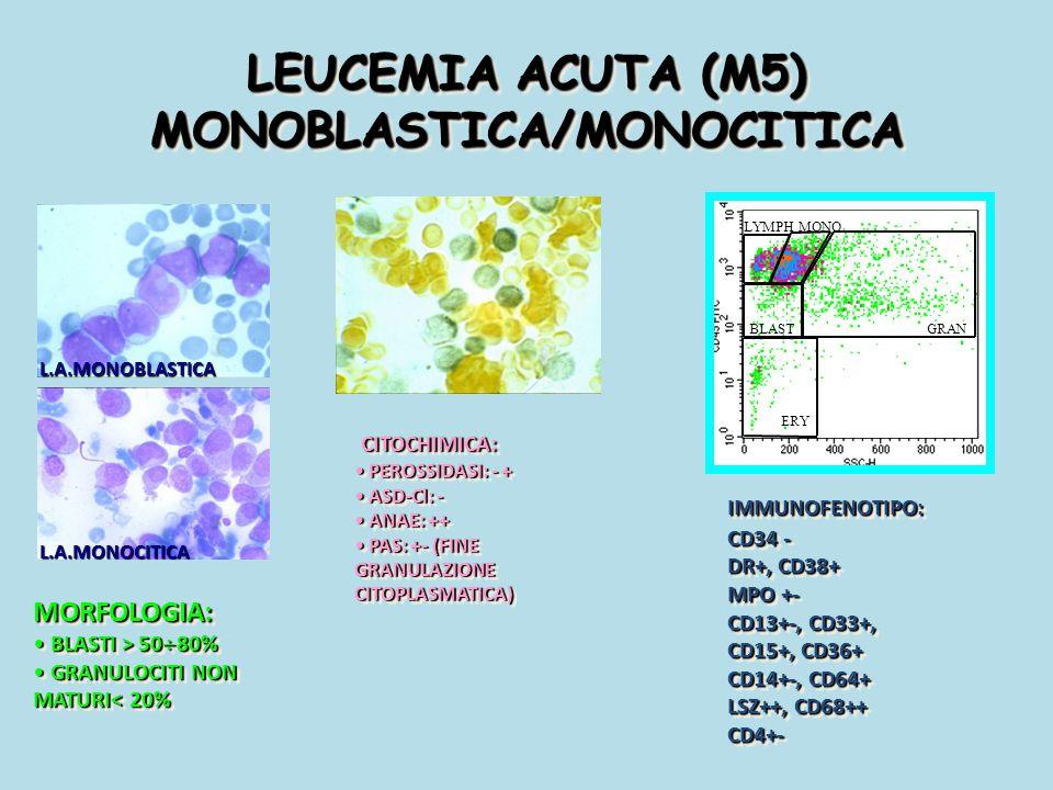 LEUCEMIA ACUTA (M5) MONOBLASTICA/MONOCITICA MORFOLOGIA: BLASTI > 50  80% BLASTI > 50  80% GRANULOCITI NON MATURI< 20% GRANULOCITI NON MATURI< 20%MOR