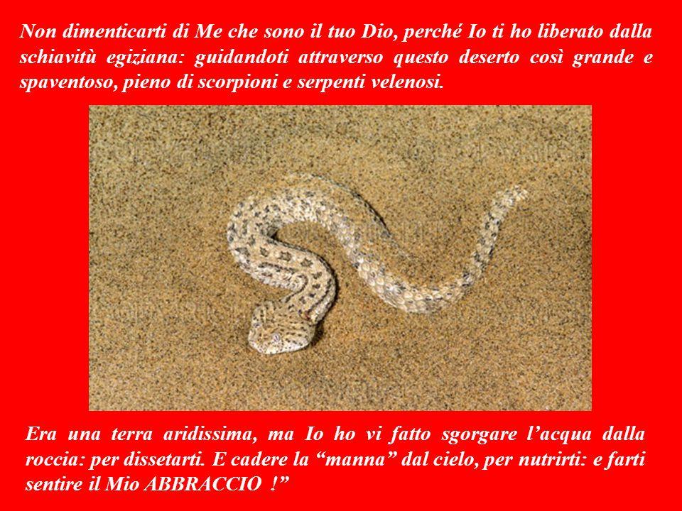 Non dimenticarti di Me che sono il tuo Dio, perché Io ti ho liberato dalla schiavitù egiziana: guidandoti attraverso questo deserto così grande e spaventoso, pieno di scorpioni e serpenti velenosi.