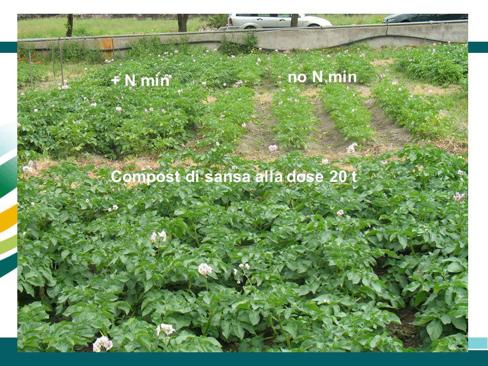 Compost di sansa alla dose 20 t + N min no N min