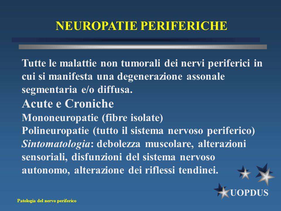 Patologia del nervo periferico UOPDUS NEUROPATIE PERIFERICHE Tutte le malattie non tumorali dei nervi periferici in cui si manifesta una degenerazione