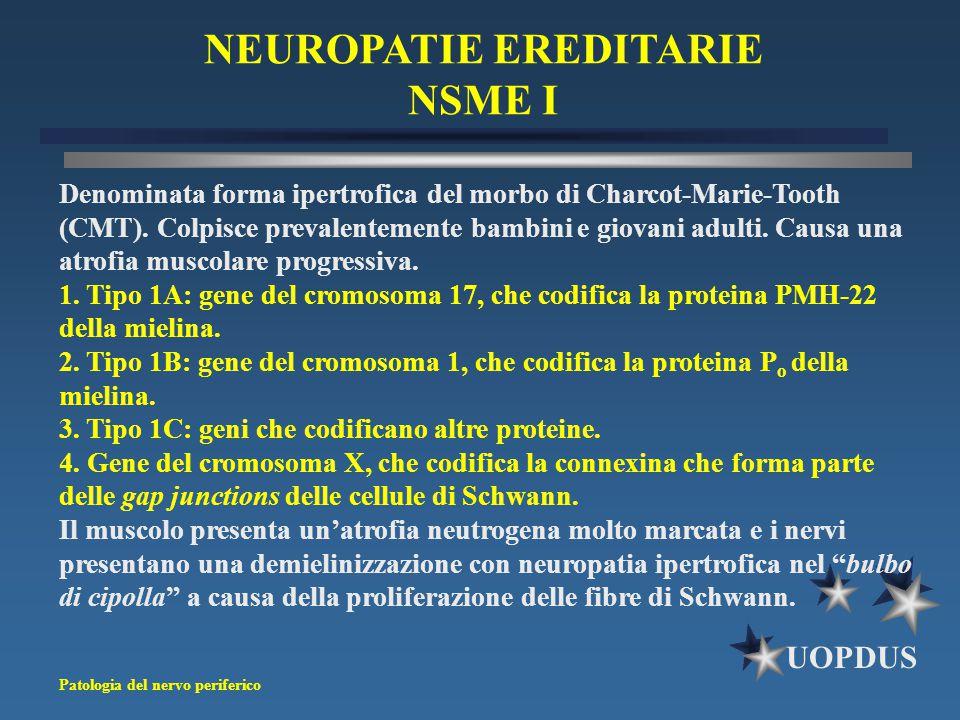 Patologia del nervo periferico UOPDUS NEUROPATIE EREDITARIE NSME I Denominata forma ipertrofica del morbo di Charcot-Marie-Tooth (CMT). Colpisce preva