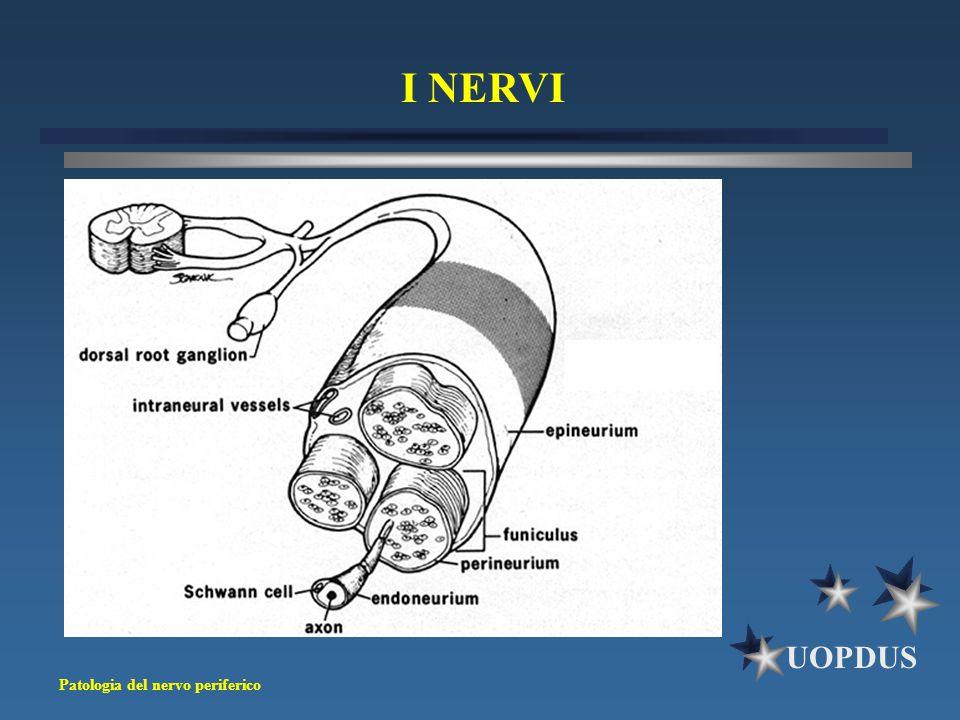 Patologia del nervo periferico UOPDUS I NERVI