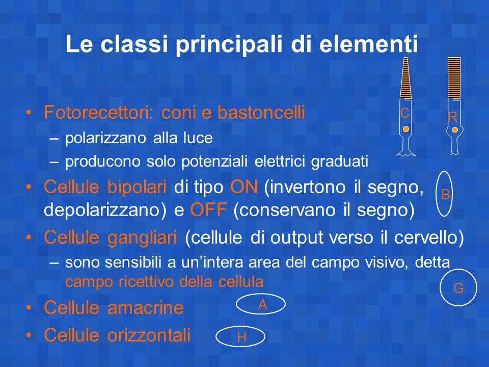 Le classi principali di elementi Fotorecettori: coni e bastoncelli –polarizzano alla luce –producono solo potenziali elettrici graduati Cellule bipola