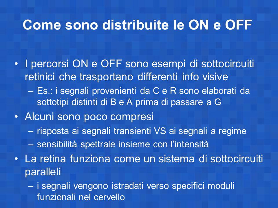 Come sono distribuite le ON e OFF I percorsi ON e OFF sono esempi di sottocircuiti retinici che trasportano differenti info visive –Es.: i segnali provenienti da C e R sono elaborati da sottotipi distinti di B e A prima di passare a G Alcuni sono poco compresi –risposta ai segnali transienti VS ai segnali a regime –sensibilità spettrale insieme con l'intensità La retina funziona come un sistema di sottocircuiti paralleli –i segnali vengono istradati verso specifici moduli funzionali nel cervello