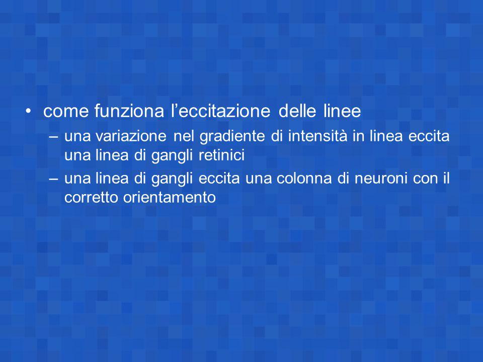 come funziona l'eccitazione delle linee –una variazione nel gradiente di intensità in linea eccita una linea di gangli retinici –una linea di gangli e