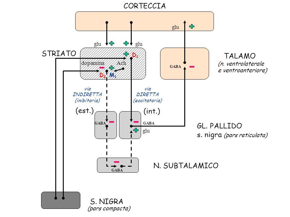 TALAMO GL. PALLIDO s. nigra (pars reticulata) N. SUBTALAMICO S. NIGRA (est.) (int.) glu GABA STRIATO via INDIRETTA (inibitoria) via DIRETTA (eccitator