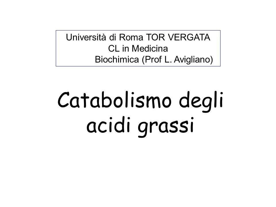 Catabolismo degli acidi grassi Università di Roma TOR VERGATA CL in Medicina Biochimica (Prof L. Avigliano)