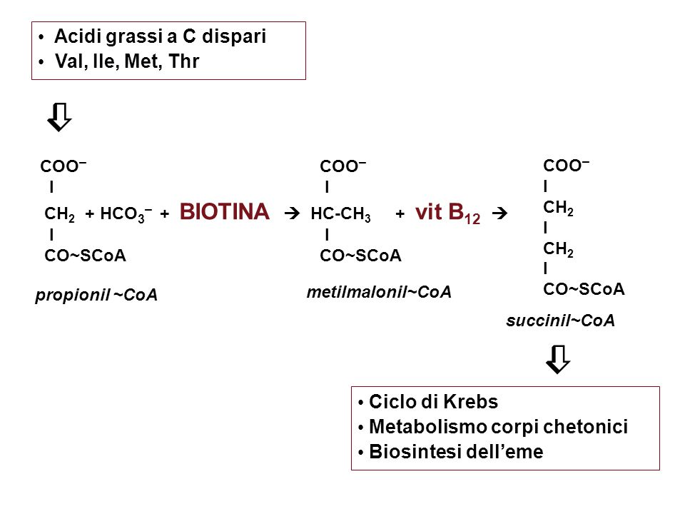 Acidi grassi a C dispari Val, Ile, Met, Thr COO – I HC-CH 3 + vit B 12  I CO~SCoA COO – I CH 2 I CH 2 I CO~SCoA COO – I CH 2 + HCO 3 – + BIOTINA  I CO~SCoA propionil ~CoA metilmalonil~CoA succinil~CoA   Ciclo di Krebs Metabolismo corpi chetonici Biosintesi dell'eme
