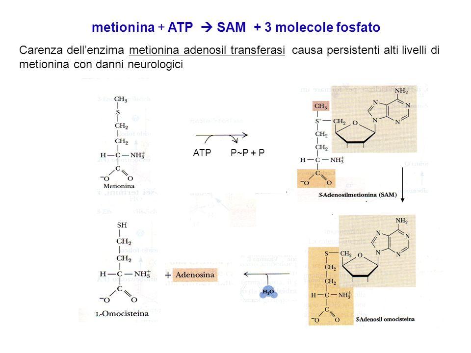 metionina + ATP  SAM + 3 molecole fosfato Carenza dell'enzima metionina adenosil transferasi causa persistenti alti livelli di metionina con danni neurologici SH ATP P~P + P