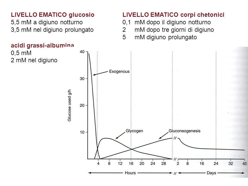 LIVELLO EMATICO corpi chetonici 0,1 mM dopo il digiuno notturno 2 mM dopo tre giorni di digiuno 5 mM digiuno prolungato LIVELLO EMATICO glucosio 5,5 mM a digiuno notturno 3,5 mM nel digiuno prolungato acidi grassi-albumina 0,5 mM 2 mM nel digiuno