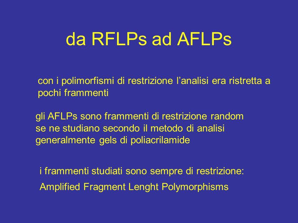 da RFLPs ad AFLPs con i polimorfismi di restrizione l'analisi era ristretta a pochi frammenti gli AFLPs sono frammenti di restrizione random se ne studiano secondo il metodo di analisi generalmente gels di poliacrilamide i frammenti studiati sono sempre di restrizione: Amplified Fragment Lenght Polymorphisms