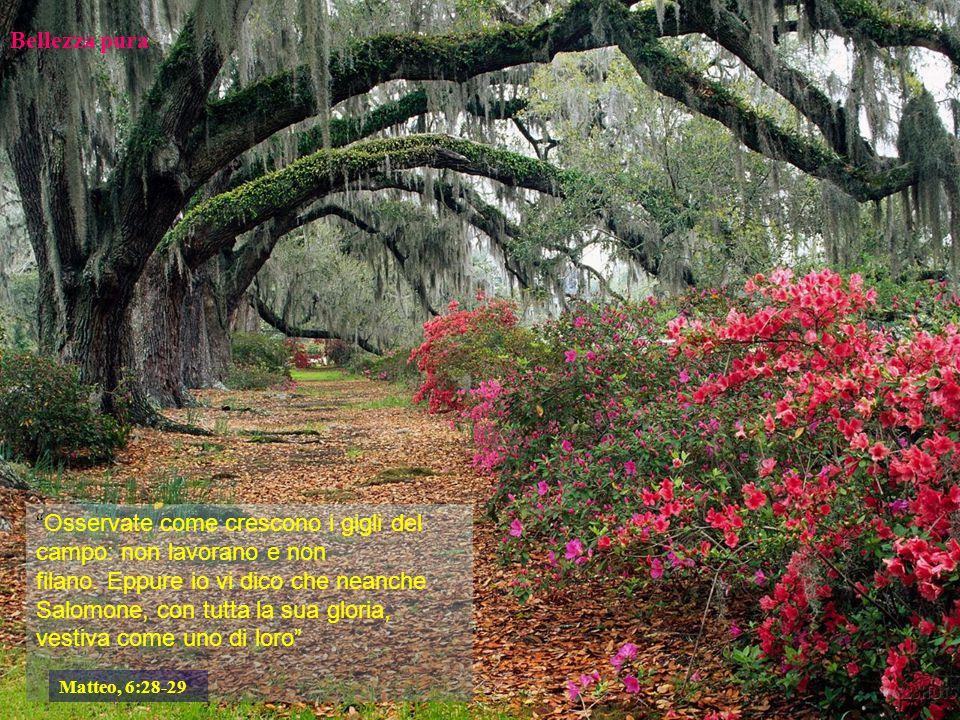 Un punto di vista La bellezza non è che una qualità intrinseca delle cose.